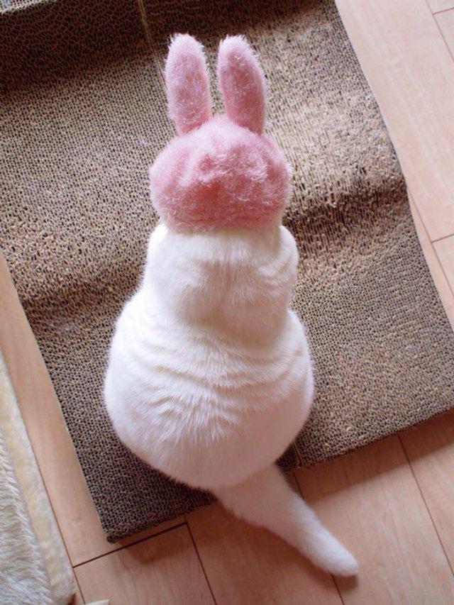 gato-anciano-disfrazado-ura-japon (3)