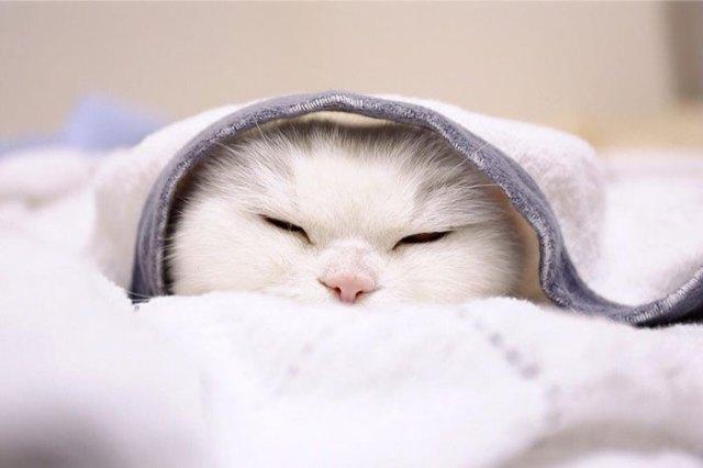 gato-anciano-disfrazado-ura-japon (8)