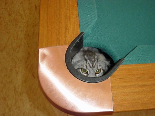 gatos-cometiendo-errores (7)
