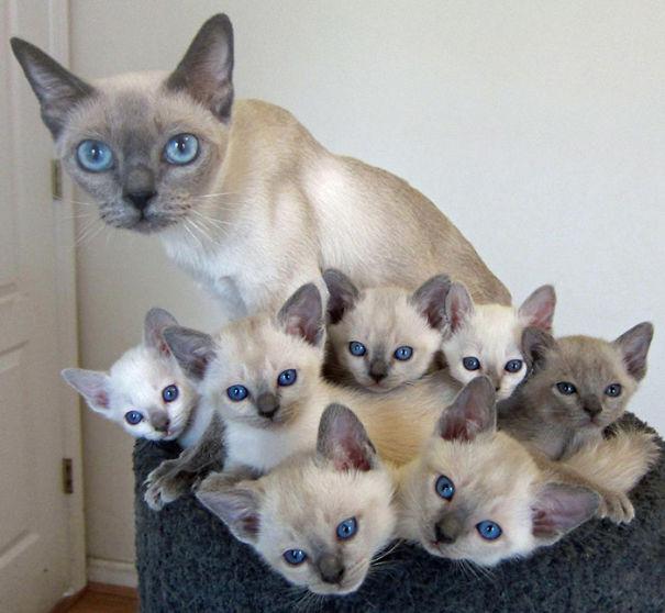orgullosas-mamas-gato (2)