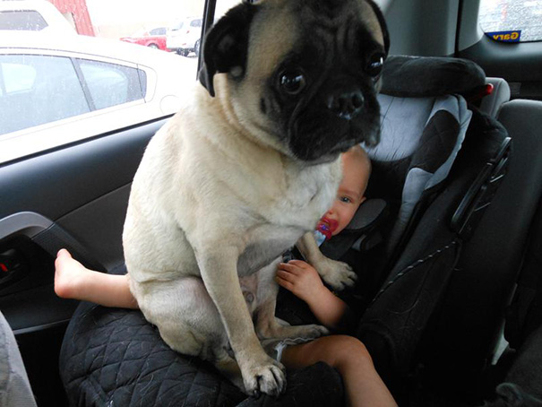perros-violando-espacio-personal (3)