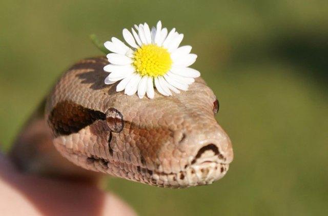 serpientes-llevando-sombrero (11)