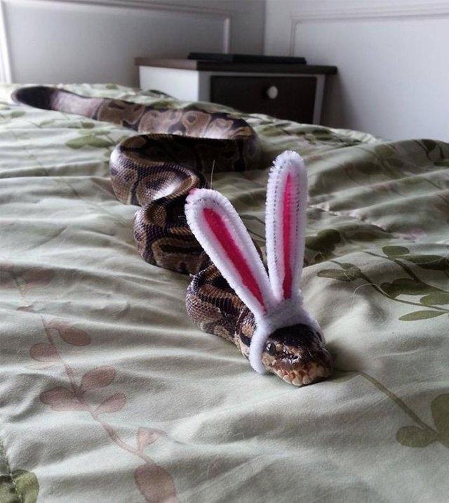 serpientes-llevando-sombrero (15)
