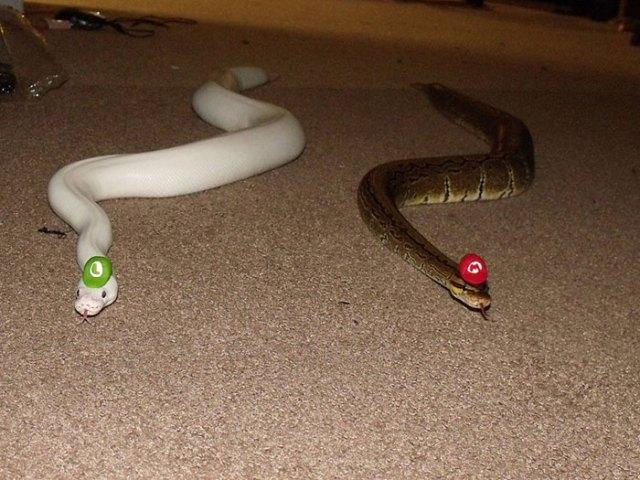 serpientes-llevando-sombrero (2)