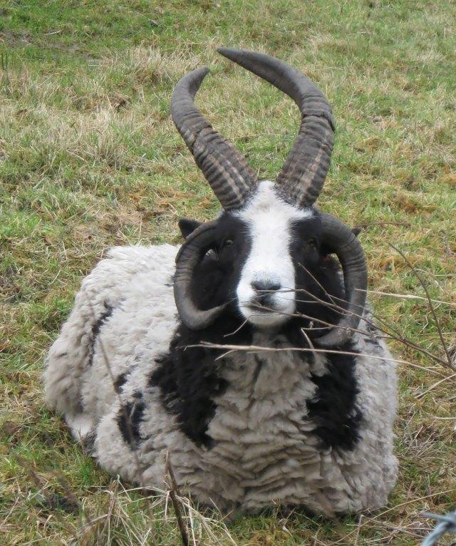 animales-hibridos-reales (15)