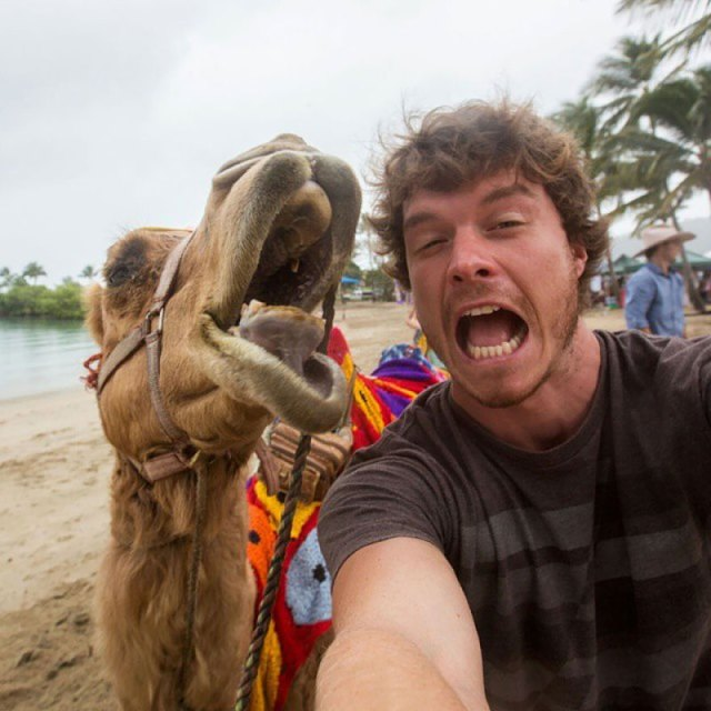 experto-selfies-animales-allan-dixon (2)