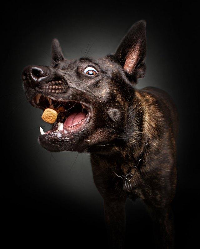 fotos-perros-expresiones-faciales-comida-christian-vieler (1)