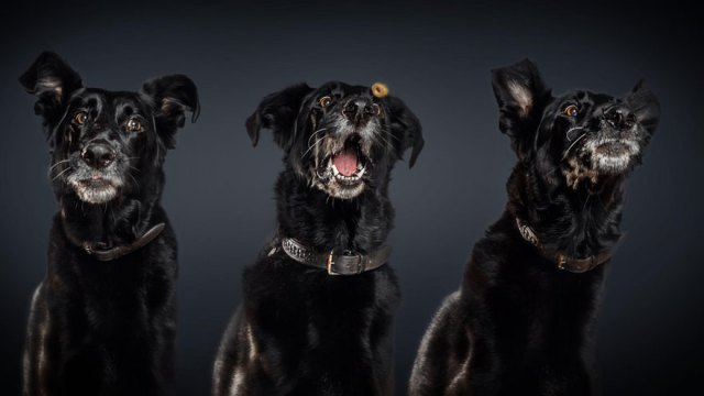fotos-perros-expresiones-faciales-comida-christian-vieler (11)