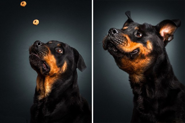 fotos-perros-expresiones-faciales-comida-christian-vieler (5)
