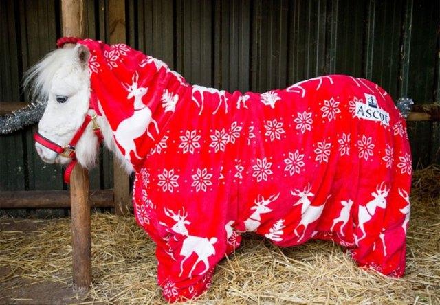 foursie-mono-festivo-pony-daffy (5)