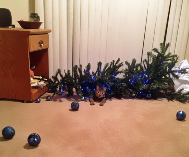 gatos-decorando-destruyendo-arbol-navidad (10)