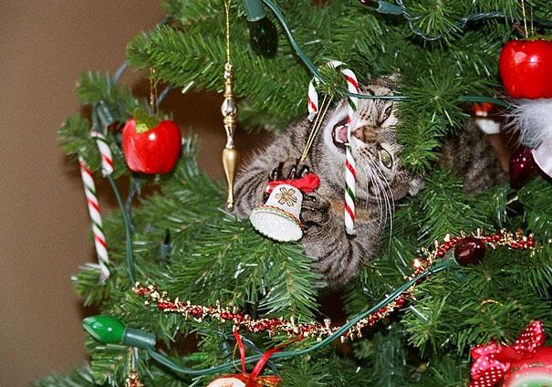 gatos-decorando-destruyendo-arbol-navidad (8)
