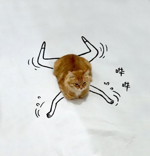 meme-foto-gato-dibujos-divertidos (10)
