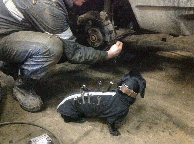 perro-salchicha-traje-mecanico-herramientas (3)