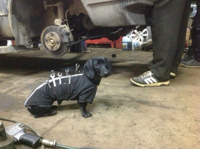 perro-salchicha-traje-mecanico-herramientas (4)