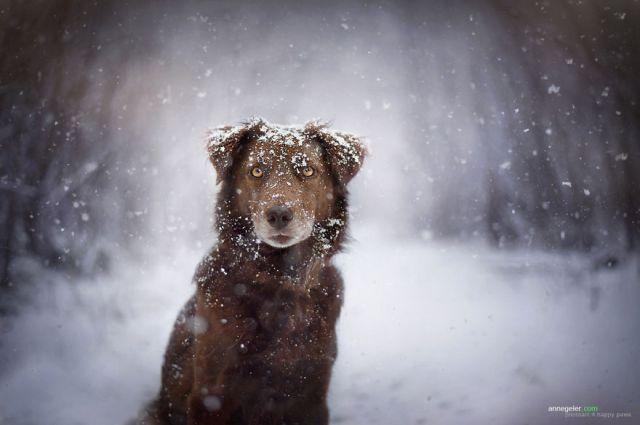 retratos-perros-naturaleza-anne-geier (10)