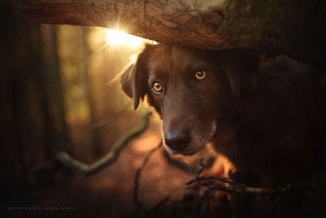 retratos-perros-naturaleza-anne-geier (12)