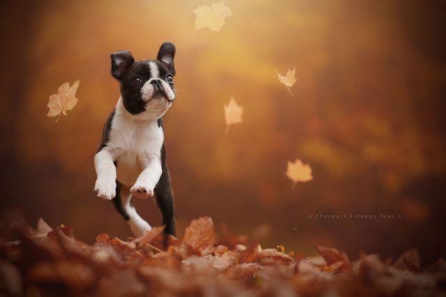 retratos-perros-naturaleza-anne-geier (21)
