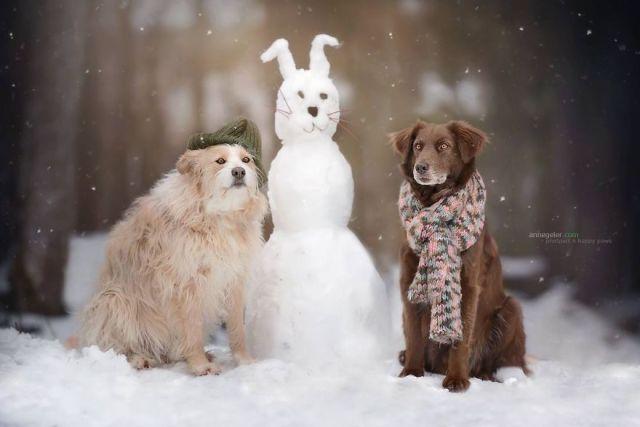 retratos-perros-naturaleza-anne-geier (27)