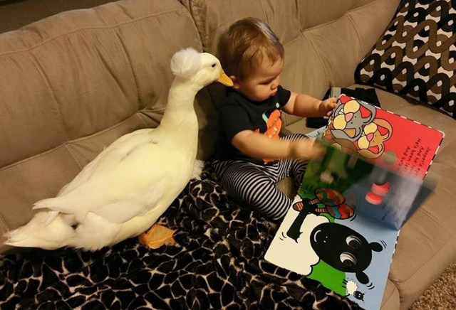 amistad-mascota-pato-beaker-nino-tyler-young (5)