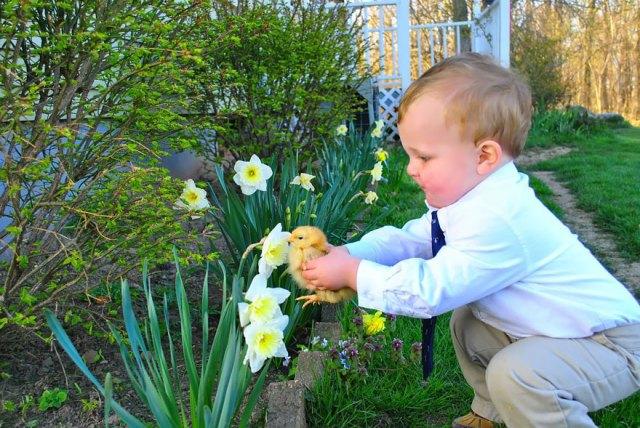 animales-oliendo-flores (7)