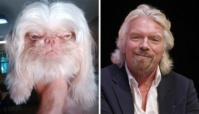 animales-parecidos-celebridades (2)