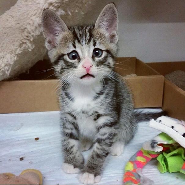bum-gato-ojos-preocupados (1)