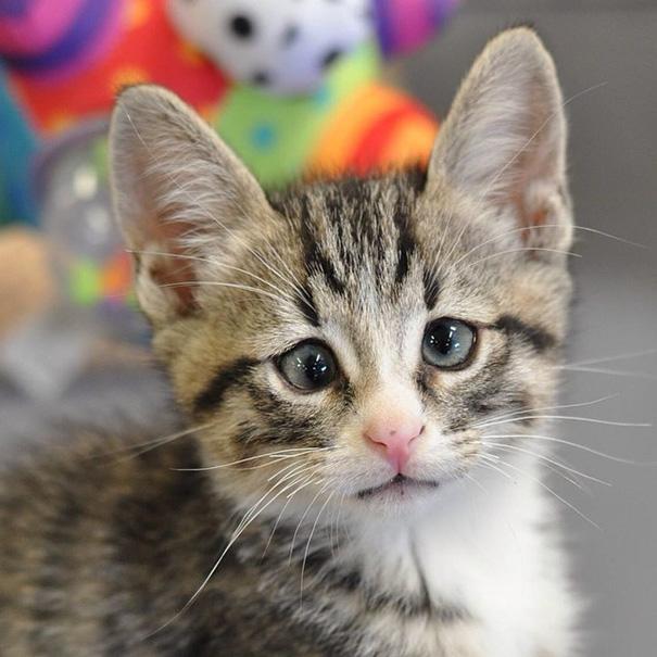 bum-gato-ojos-preocupados (4)