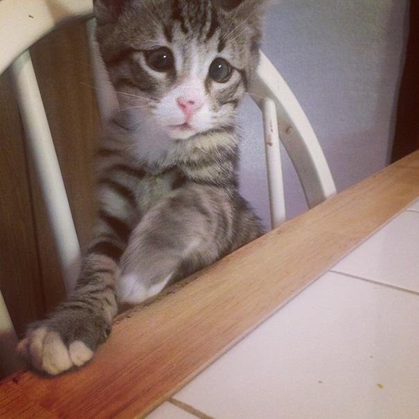 bum-gato-ojos-preocupados (6)