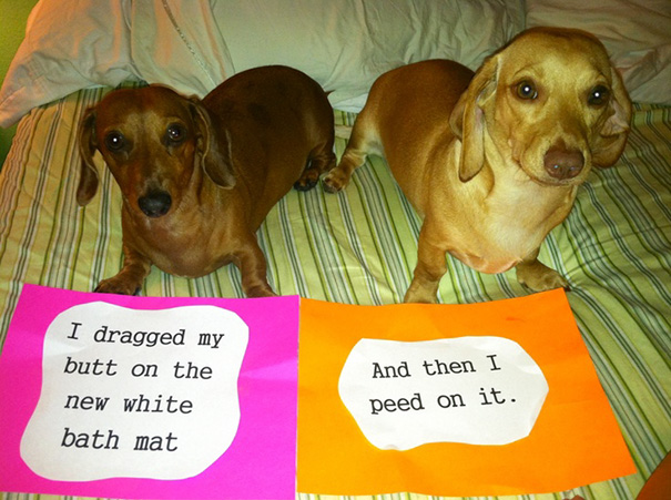 castigo-avergonzar-duos-animales (2)