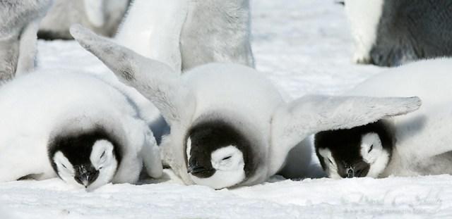 dia-concienciacion-pinguinos (10)