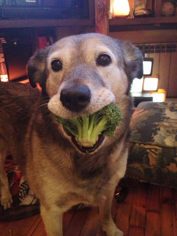 divertidos-animales-comiendo (11)