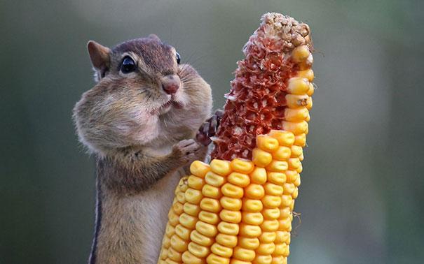 divertidos-animales-comiendo (7)