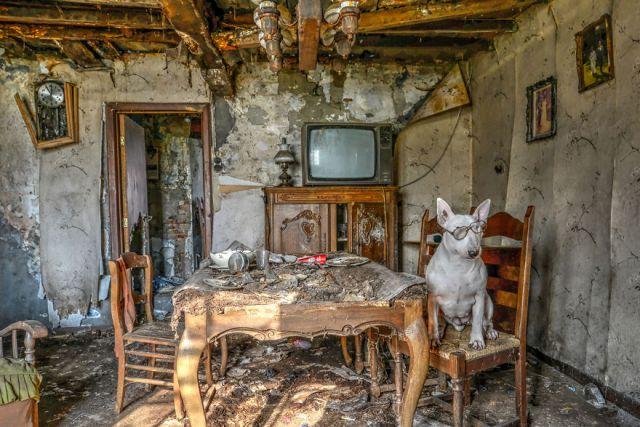 exploracion-lugares-abandonados-perro-claire-alice-van-kempen (18)