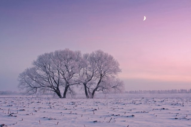 Frosty winter morning
