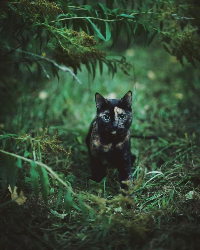fotos-gato-estaciones (12)