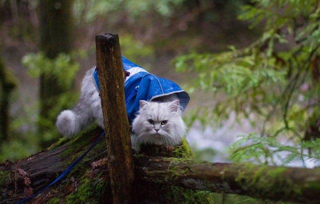 gandalf-gato-viajero (4)