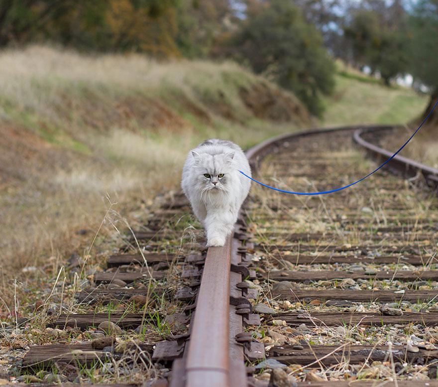 gandalf-gato-viajero (7)