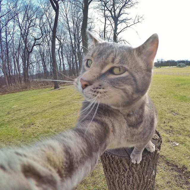 gato-manny-selfies-camara-gopro (6)