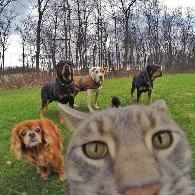 gato-manny-selfies-camara-gopro (8)
