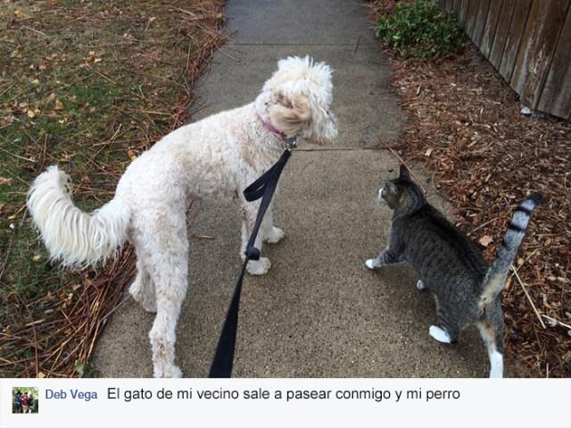 gato-mascota-nala-familia-secreta-(3)