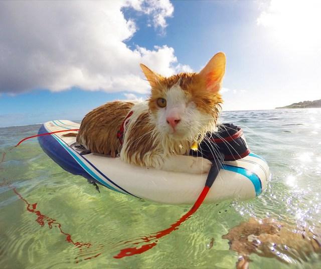 kuli-gato-tuerto-surfero-hawai (2)