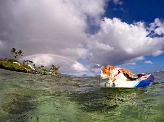 kuli-gato-tuerto-surfero-hawai (6)