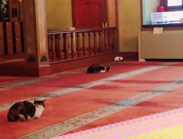 mezquita-gatos-callejeros-mustafa-efe-estambul (5)