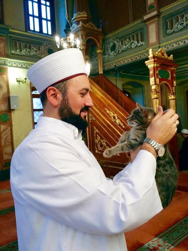 mezquita-gatos-callejeros-mustafa-efe-estambul (6)