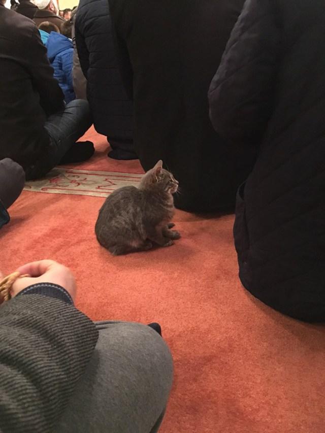 mezquita-gatos-callejeros-mustafa-efe-estambul (7)