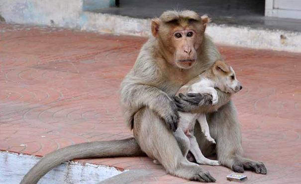 mono-adopta-cachorro-perro-india (3)