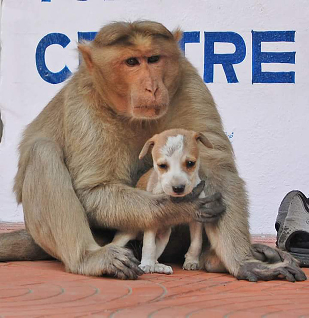 mono-adopta-cachorro-perro-india (6)