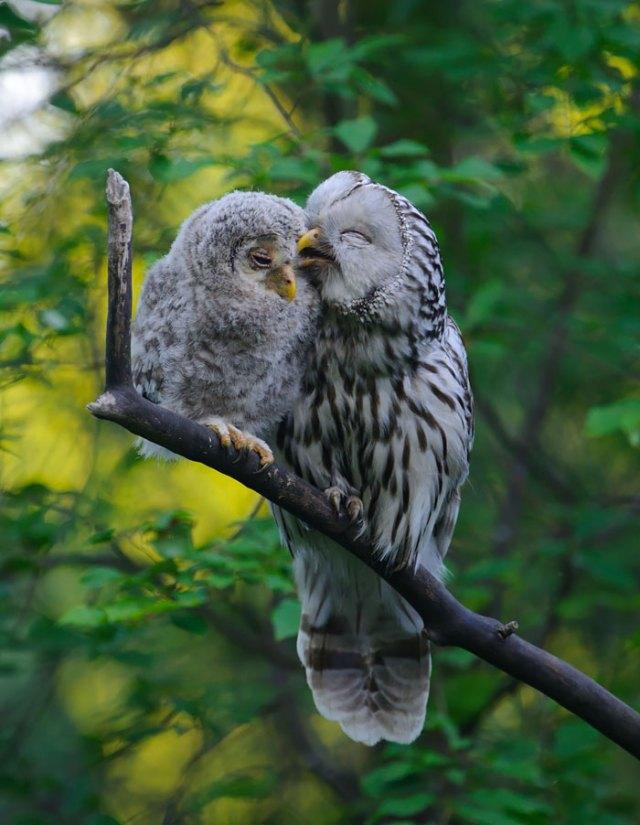 padres-pajaro-polluelos (3)