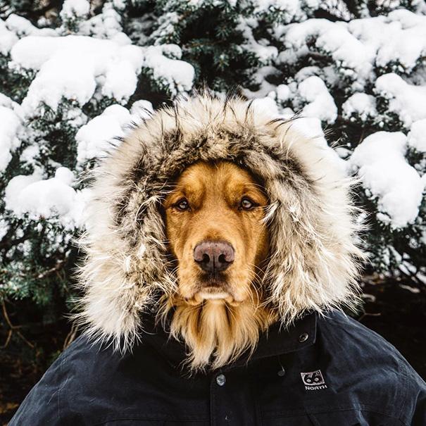 perro-aspen-viajes-aventura-hunter-lawrence (15)